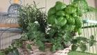 herb-garden-class